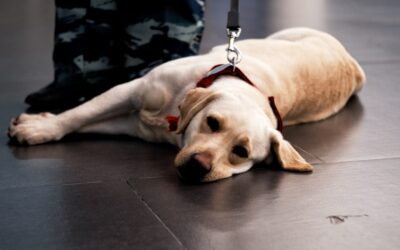 Finland Detects Coronavirus with Sniffer Dogs